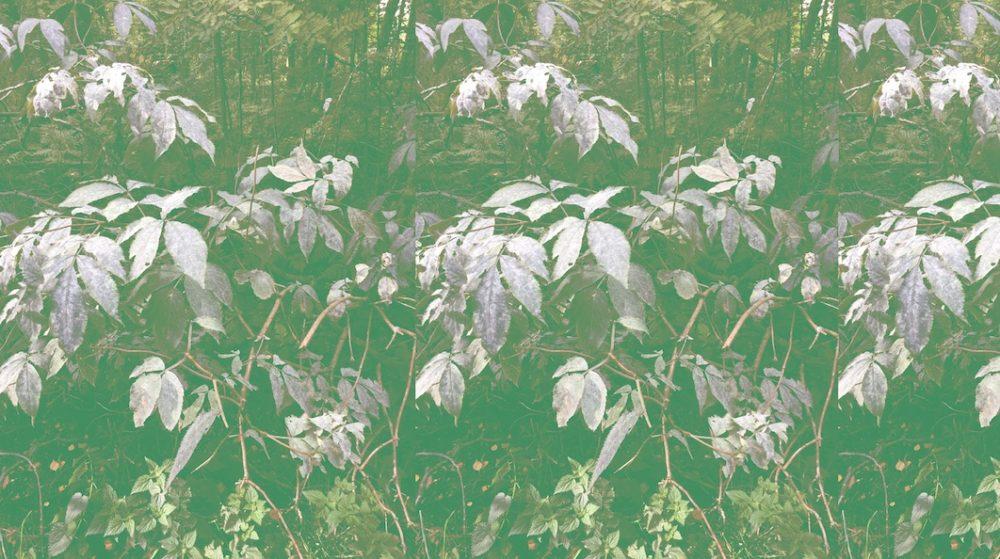 Vimma Cotton textile siellä jossain green Jersey - Cotton textile, green, Jersey, siellä jossain
